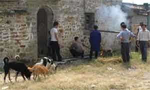 готовят собаку