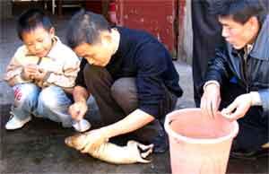 приготовление маленькой собачки